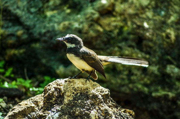 local bird 2