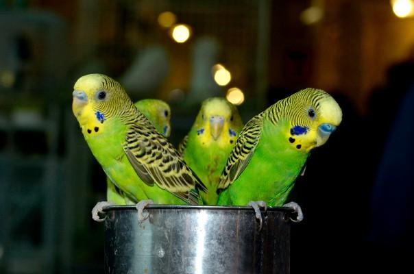 souq waqip bird