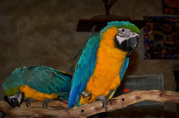 souq waqip bird2